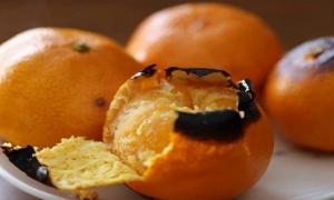 Những cách ăn cam bổ dưỡng hơn cả ăn trực tiếp, cực phù hợp với mùa thu