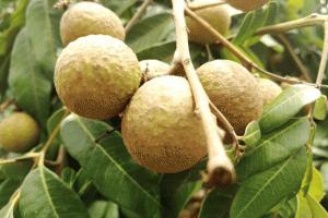 4 loại trái cây cần hạn chế bé ăn vào mùa hè nếu không muốn con bị táo bón, tâm tính hay cáu giận
